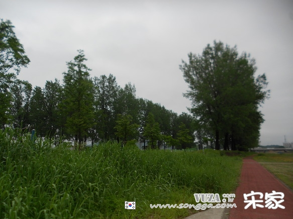 보강천공원 미루나무 숲.jpg